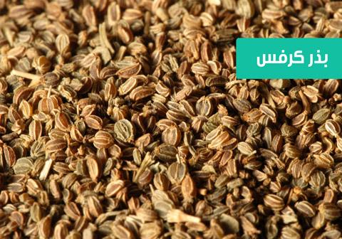 خرید بذر کرفس , خواص بذر کرفس , نحوه کاشت بذر کرفس , زمان کاشت بذر کرفس , آبیاری کرفس , نیاز نوری کرفس , خرید اینترنتی بذر کرفس