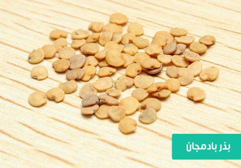 خرید بذر بادمجان , بهترین بذر بادمجان , روش کاشت بذر بادمجان , آبیاری بادمجان , بادمجان