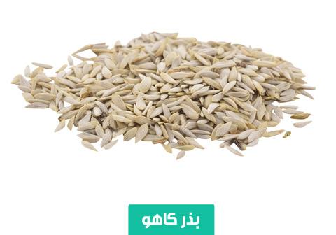 خرید بذر کاهو , بهترین بذر کاهو , بذر کاهو ایرانی , نحوه کاشت کاهو , نیاز آبی کاهو , نیاز نوری کاهو