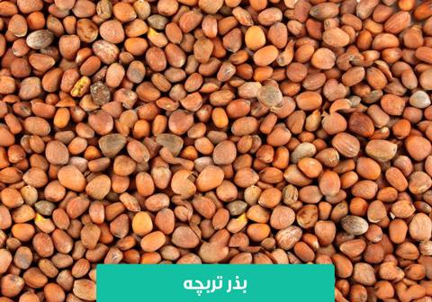 خرید بذر تربچه , بذر تربچه , نحوه کاشت تربچه در گلدان , نحوه کاشت تربچه در باغچه , نحوه آبیاری تربچه , دمای مناسب کاشت تربچه , نیاز نوری تربچه