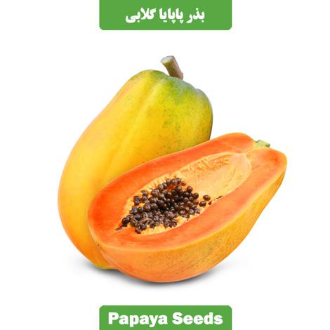 بذر پاپایا گلابی