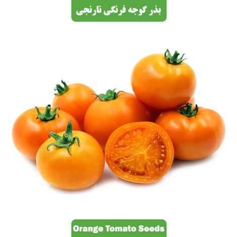 بذر گوجه فرنگی نارنجی بوته ای