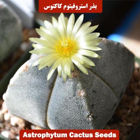 بذر استروفیتوم کاکتوس