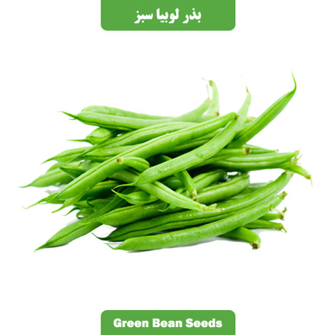 بذر لوبیا سبز