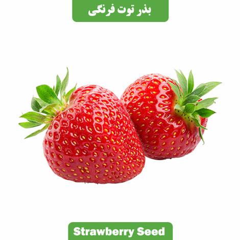 بذر توت فرنگی