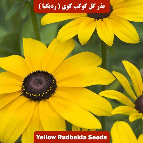 بذر گل کوکب کوهی (ردبکیا) پابلند زرد