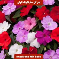 بذر گل حنا پاکوتاه الوان
