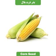 بذر ذرت بلال