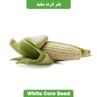 بذر ذرت سفید