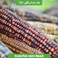 بذر ذرت رنگی 80%