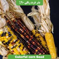 بذر ذرت رنگی 90%