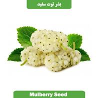 بذر توت سفید