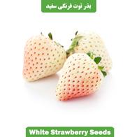 بذر توت فرنگی سفید