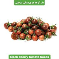 بذر گوجه چری مشکی درختی