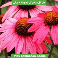 بذر گل سرخارگل پامتوسط صورتی