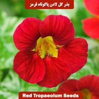 بذر گل لادن پاکوتاه قرمز