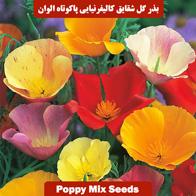 بذر گل شقایق کالیفرنیایی پاکوتاه الوان