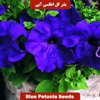 بذر گل اطلسی آبی