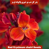 بذر گل شب بو خیری پاکوتاه قرمز