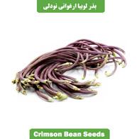 بذر لوبیا ارغوانی نودلی