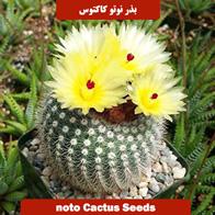 بذر نوتو کاکتوس