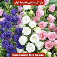 یذر گل استکانی پامتوسط الوان