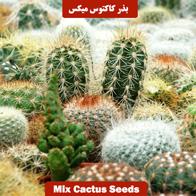 بذر کاکتوس میکس