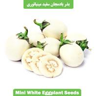 بذر بادمجان سفید مینیاتوری