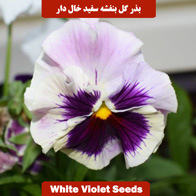 بذر گل بنفشه سفید خال دار