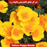بذر گل شقایق کالیفرنیایی پاکوتاه زرد