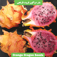 بذر دراگون نارنجی