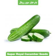 بذر خیار سوپر رویال