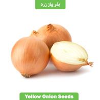 بذر پیاز زرد