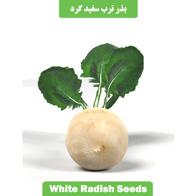بذر ترب سفید گرد