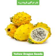 بذر دراگون فروت زرد