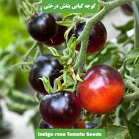 بذر گوجه فرنگی بنفش کبابی درختی