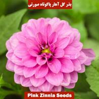 بذر گل آهار پاکوتاه صورتی