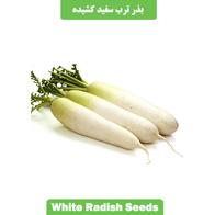 بذر ترب سفید کشیده