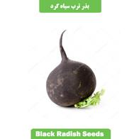 بذر ترب سیاه گرد