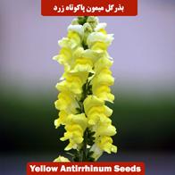 بذر گل میمون پاکوتاه زرد