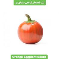 بذر بادمجان نارنجی مینیاتوری