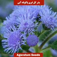 بذر گل ابری پاکوتاه آبی