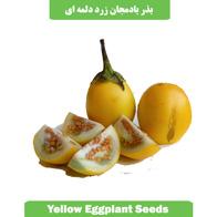 بذر بادمجان زرد دلمه ای