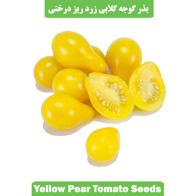بذر گوجه گلابی زرد ریز درختی