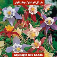 بذر گل تاج الملوک پابلند الوان