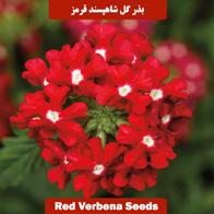 بذر گل شاهپسند قرمز