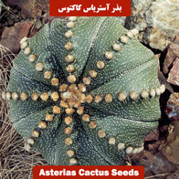 بذر آستریاس کاکتوس