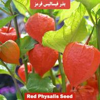 بذر فیسالیس قرمز
