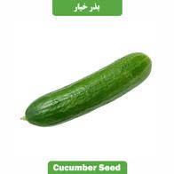 بذر خیار بوته ای