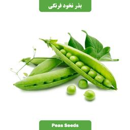 بذر نخودفرنگی